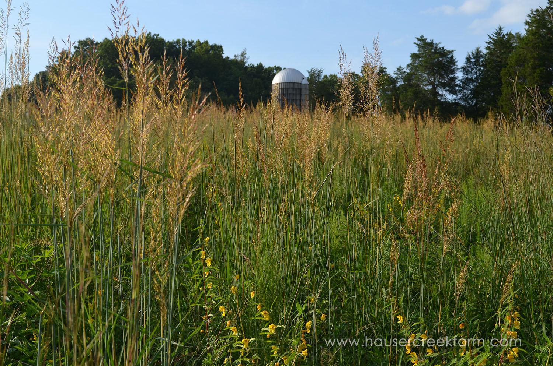 indian grass 010.JPG