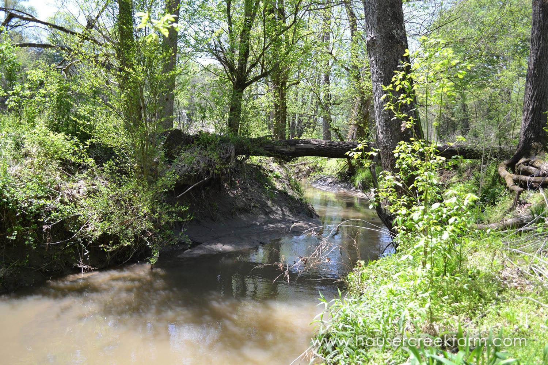 Hauser Creek before renovation