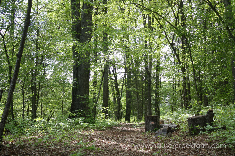 forest-trees-at-hauser-creek-farm-photo-by-annie-segal-4408.jpg