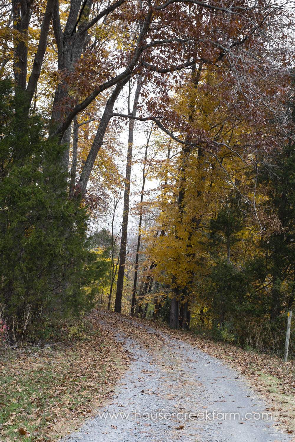 road-with-yellow-fall-leaves-photo-by-chris-fowler-1170color.jpg