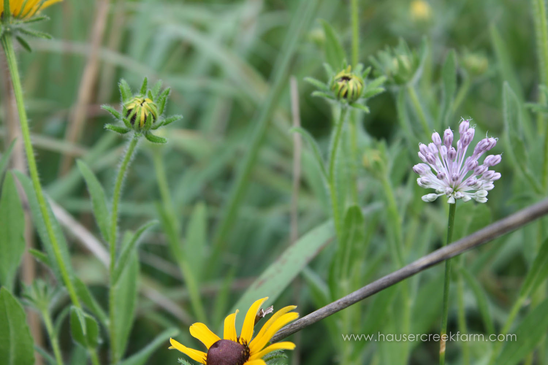 wild-flowers-on-farm-in-north-carolina-hauser-creek-IMG_9177.jpg