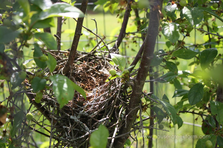 bird-nest-at-hauser-creek-farm-photo-by-annie-segal-4405.jpg