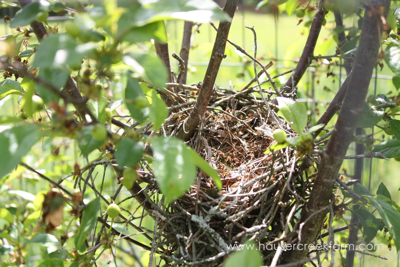 bird-nest-at-hauser-creek-farm-photo-by-annie-segal-4406.jpg