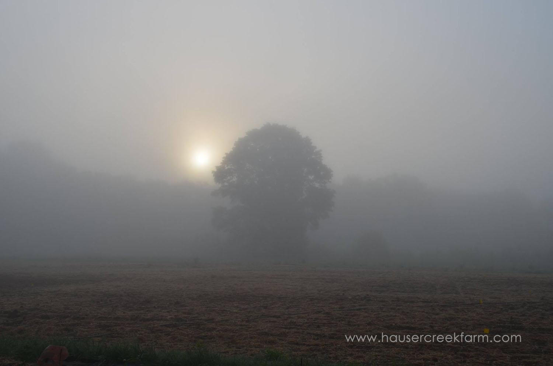 sun-through-fog-at-hauser-creek-farm.jpg