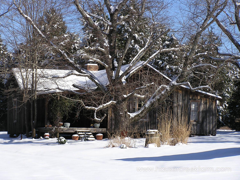 January-snow-blue-sky-at-hauser-creek-farm-mocksville-north-carolina-016.jpg