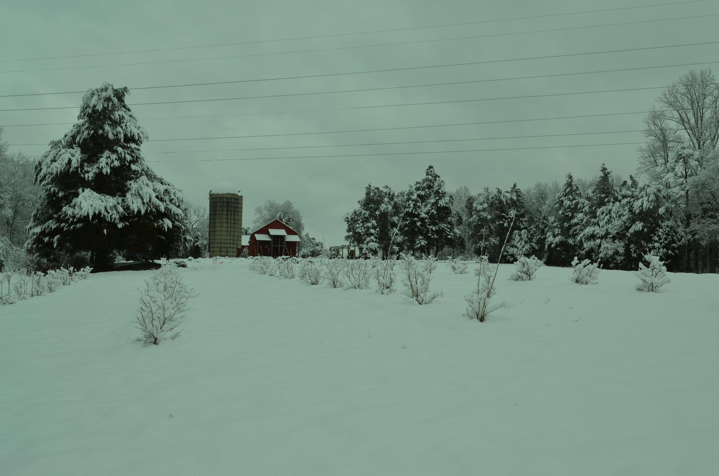 Snow day at Hauser Creek Farm