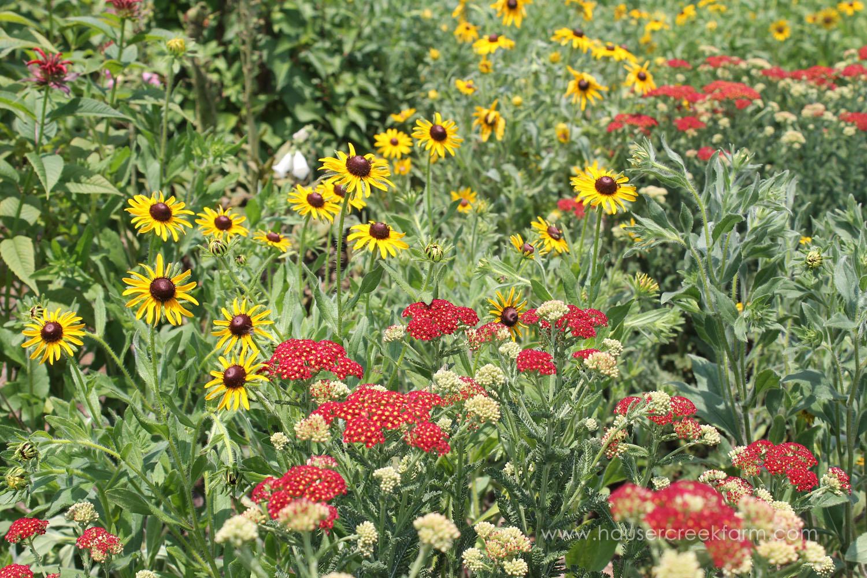 hauser-creek-farm-spring-open-farm-day-melody-watson-photo-1545.jpg