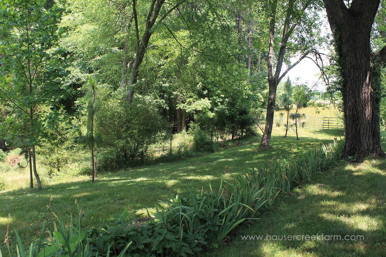trees-and-lush-green-grass-and-plants-farm-melody-watson-photo-IMG_1472.jpg