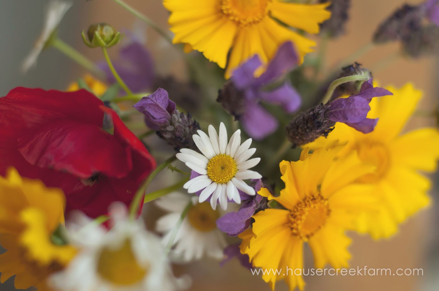 wedding-flowers-hauser-creek-farm-a-photo-by-ashley-0932.jpg