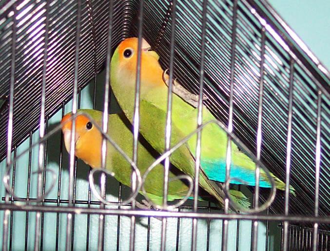 of_green3_JM_JPG.jpg