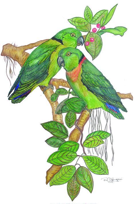 African Love Bird Society