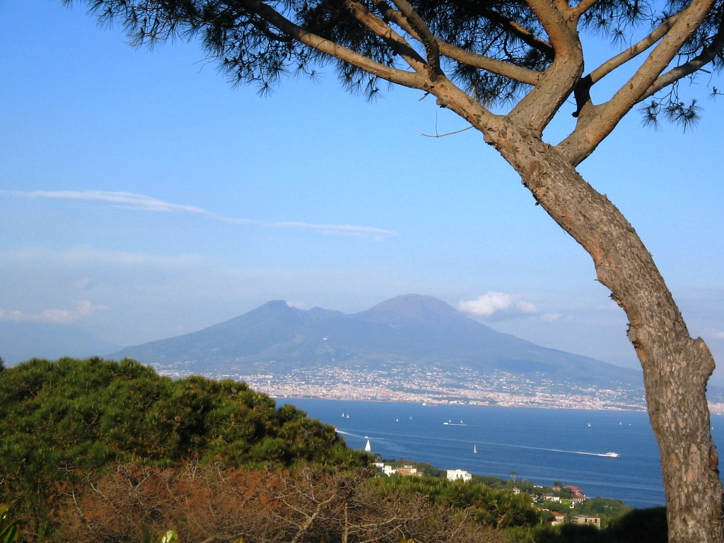 vesuvius and pine tree.jpg