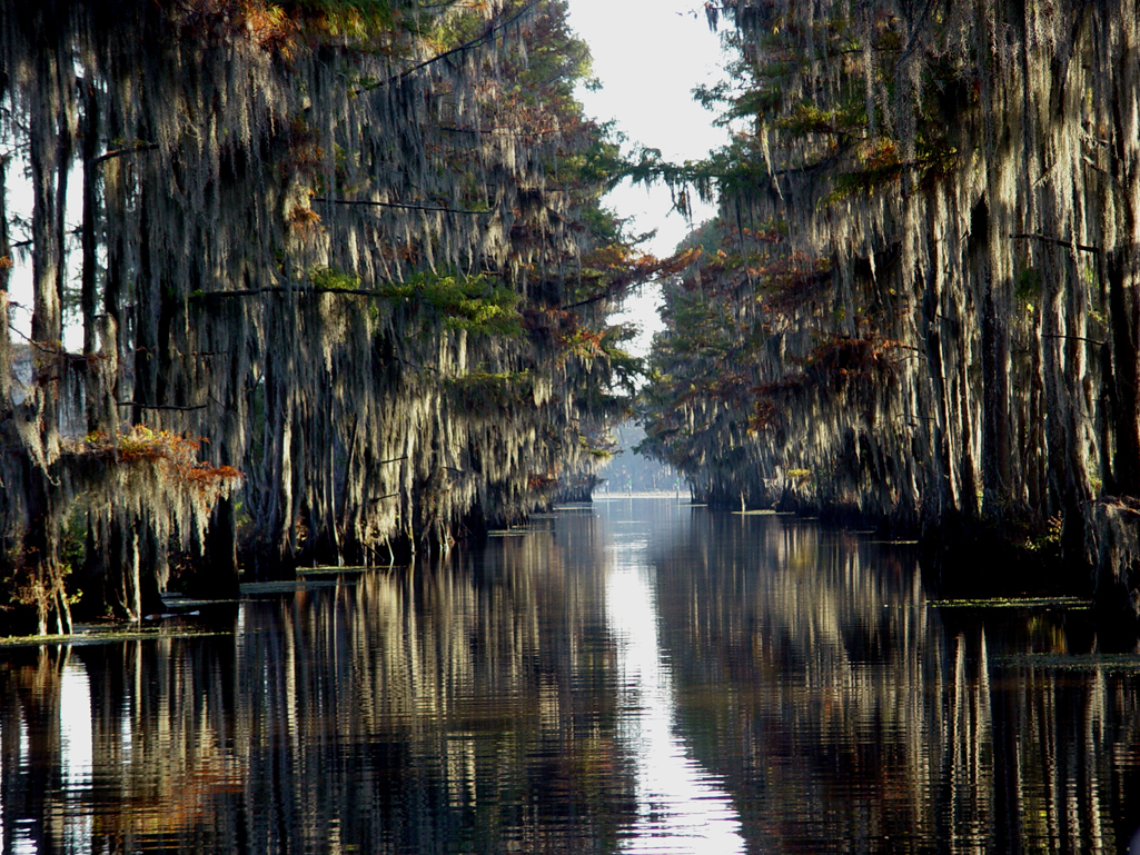 Caddo Lake. One of the most beautiful natural lakes in East Texas and Northwest Louisiana.