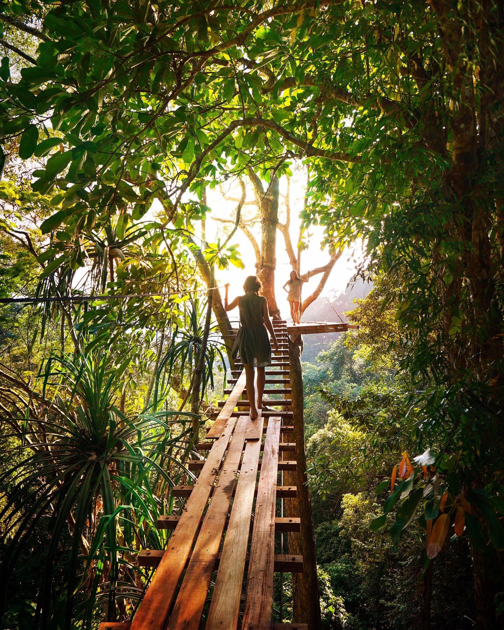 adventure-boardwalk-branch-238631.jpg