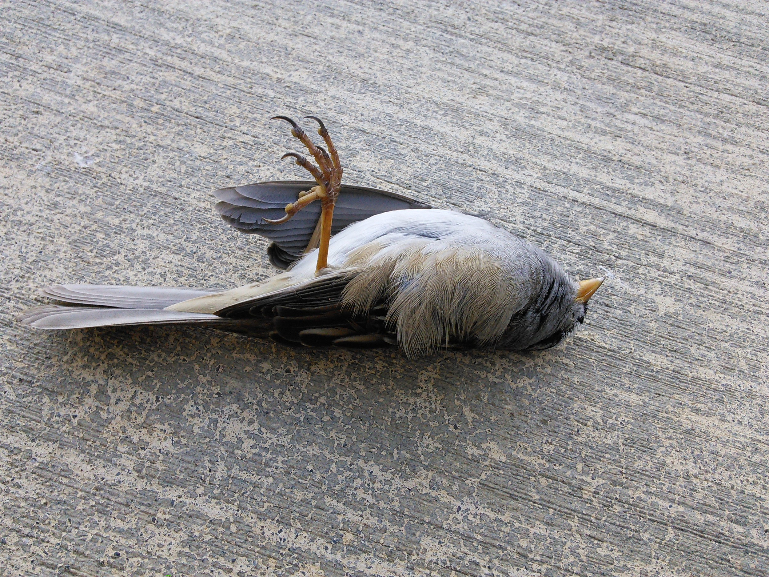 Dead Bird Token
