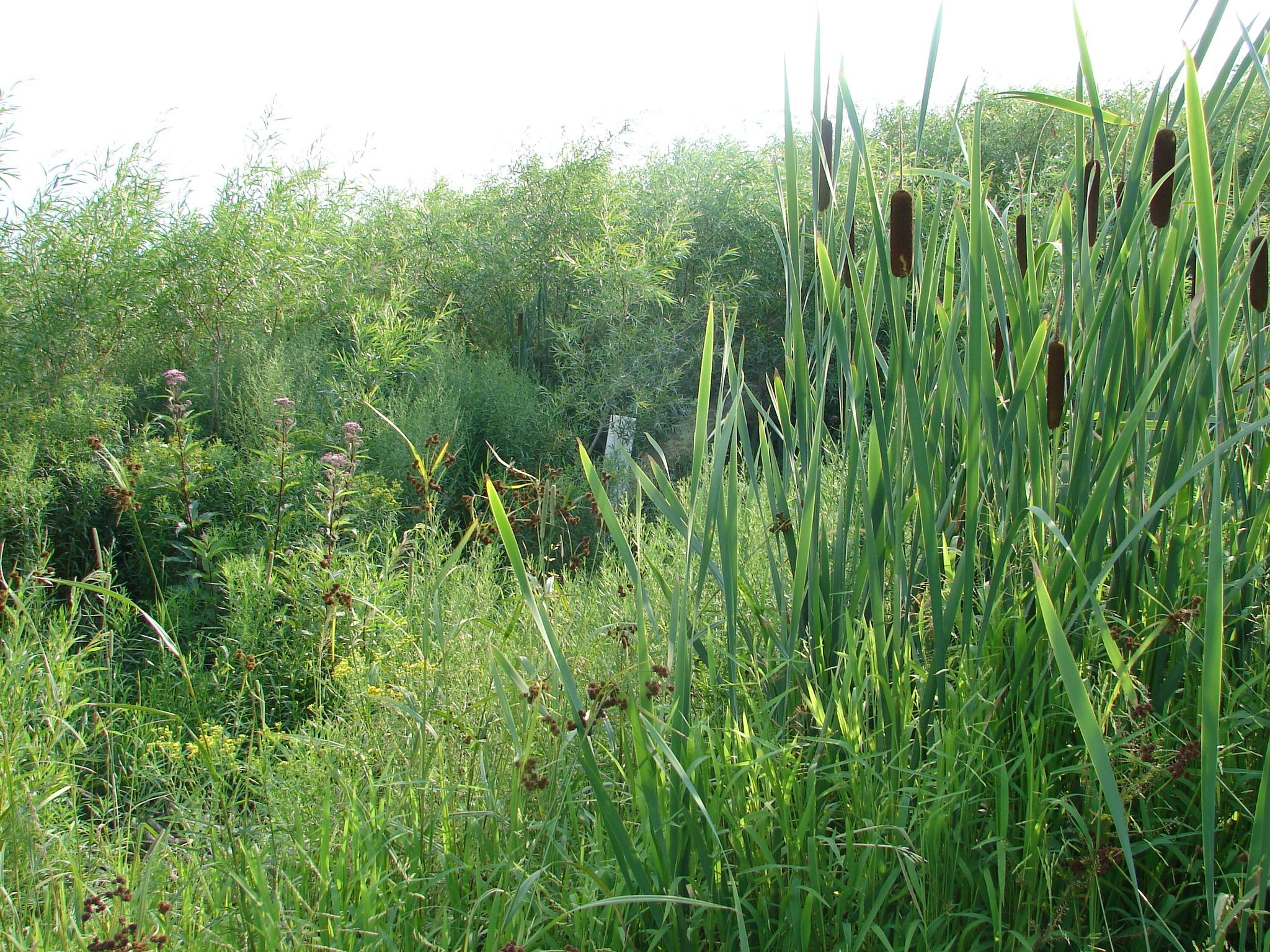 Wetland overhead shot