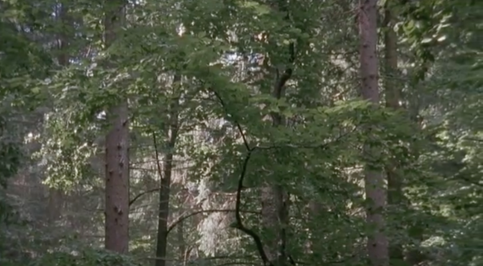 The Forest, 2005