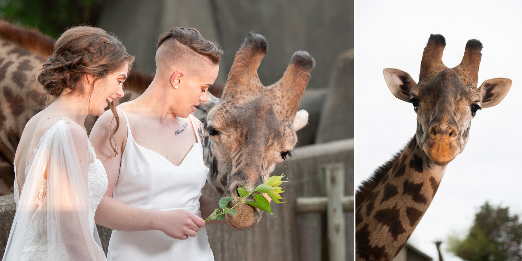 Louisville-Wedding-LGBTQ-Wedding-Louisville-Zoo