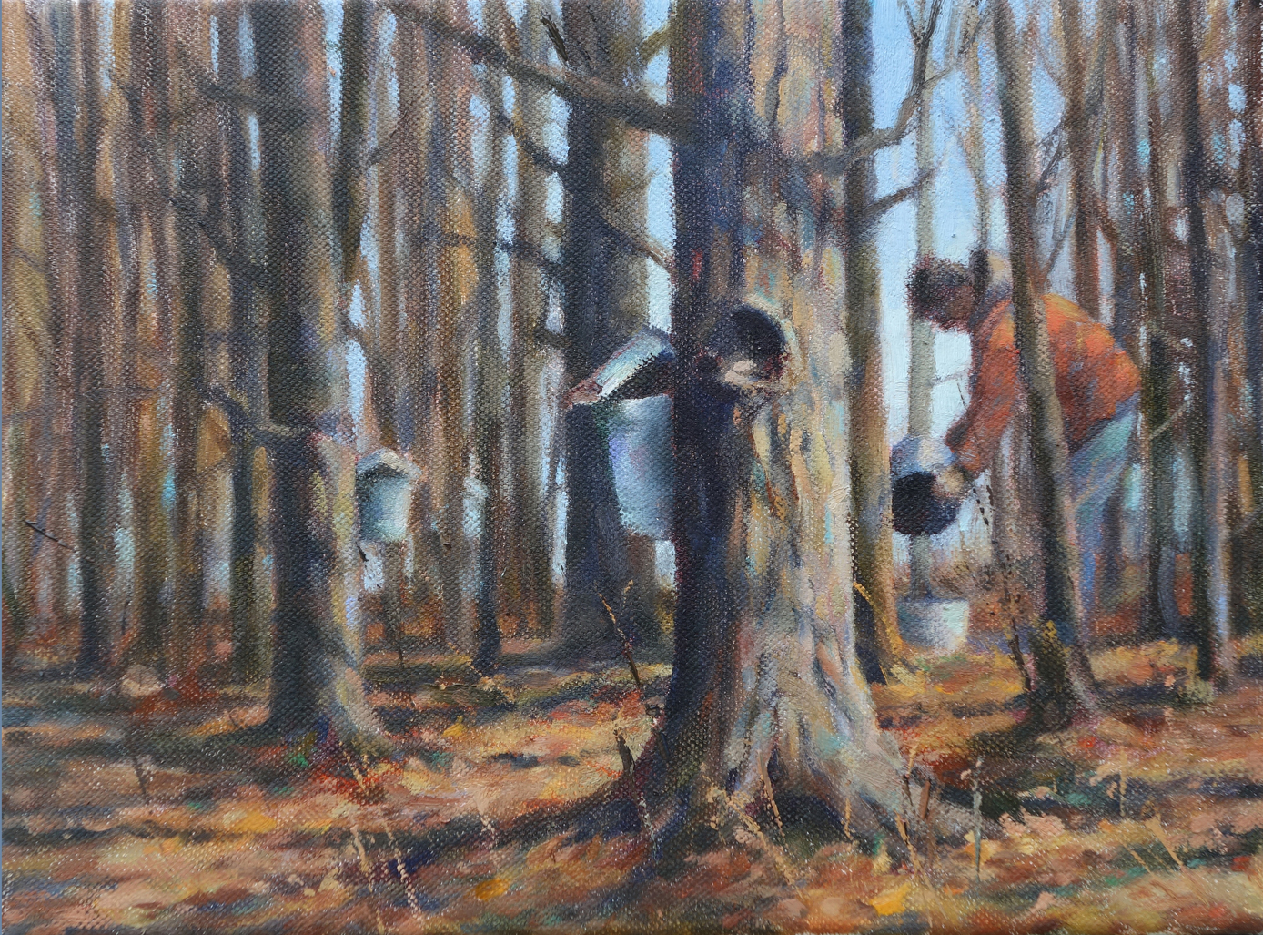 Maple Harvest