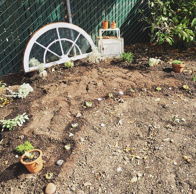 The beginnings of a long-awaited moon garden, everyone! Several artemesias, two kinds of yarrow, lavender, motherwort, wormwood and more to come. #moonplant #moongarden #artemesia #artemis #urbangarden #moonmagic #yarrow #succulents #plantsarefriends #plantpeople