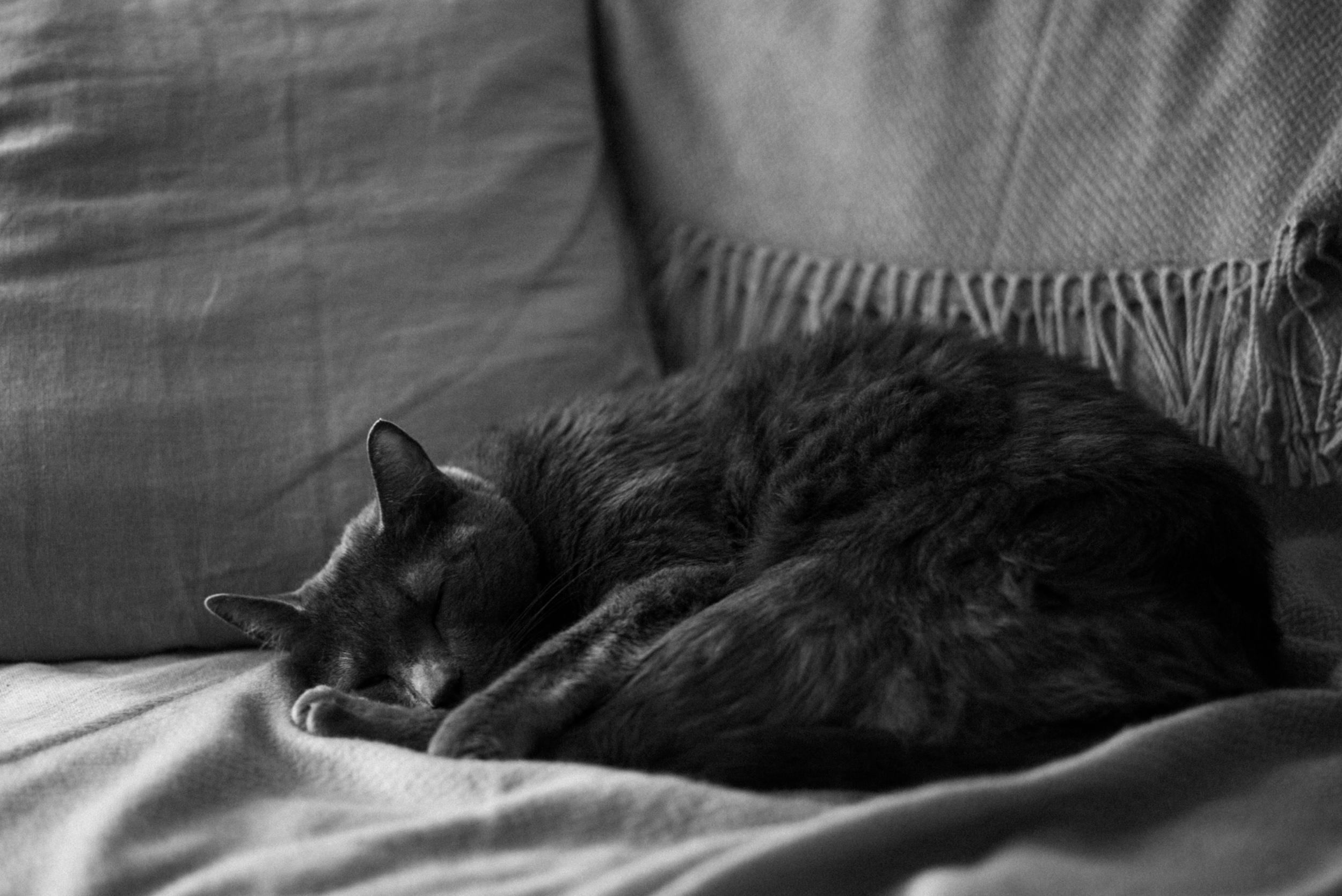 Hunter…?  Leica M (Typ240) + Summicron-M 50mm f/2.