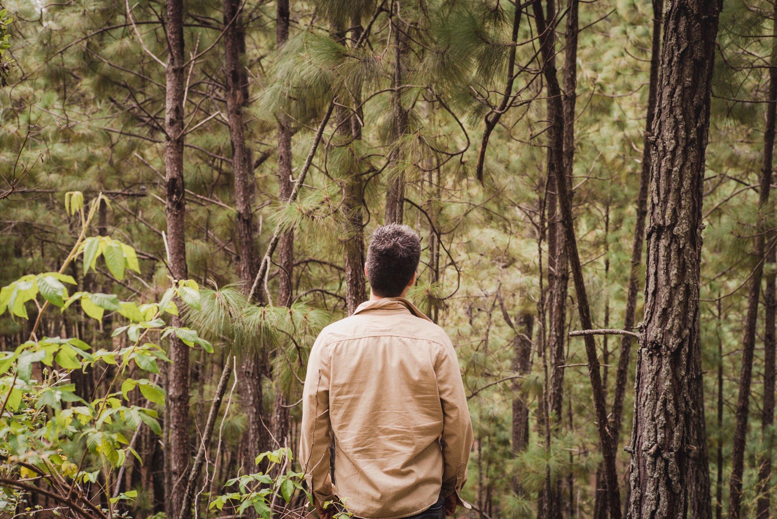 Forêt silencieuse, aimable solitude,  Que j'aime à parcourir votre ombrage ignoré !  Dans vos sombres détours, en rêvant égaré,  J'éprouve un sentiment libre d'inquiétude !  Prestiges de mon cœur ! je crois voir s'exhaler  Des arbres, des gazons une douce tristesse :  Cette onde que j'entends murmure avec mollesse,  Et dans le fond des bois semble encor m'appeler.  Oh ! que ne puis-je, heureux, passer ma vie entière  Ici, loin des humains !… Au bruit de ces ruisseaux,  Sur un tapis de fleurs, sur l'herbe printanière,  Qu'ignoré je sommeille à l'ombre des ormeaux !  Tout parle, tout me plaît sous ces voûtes tranquilles ;  Ces genêts, ornements d'un sauvage réduit,  Ce chèvrefeuille atteint d'un vent léger qui fuit,  Balancent tour à tour leurs guirlandes mobiles.  Forêts, dans vos abris gardez mes vœux offerts !  A quel amant jamais serez-vous aussi chères ?  D'autres vous rediront des amours étrangères ;  Moi de vos charmes seuls j'entretiens les déserts.  François-René de Chateaubriand.    Leica M(Typ240) + Summicron-M 50mm f/2.
