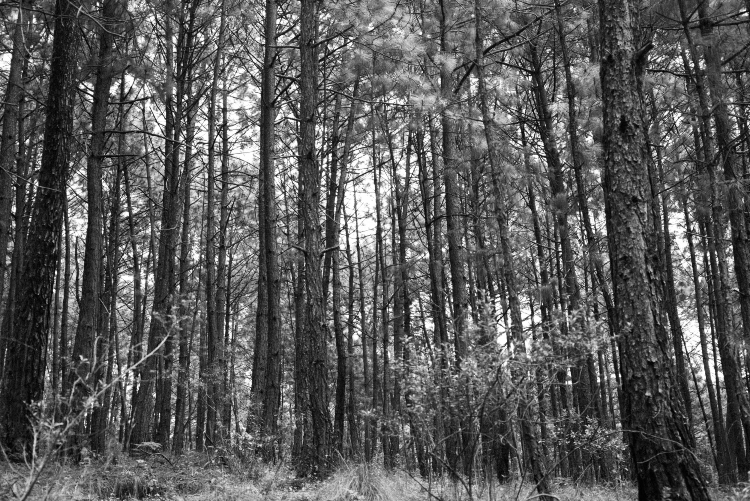 la forêt.  Leica M(Typ240) + Summicron-M 50mm f/2.