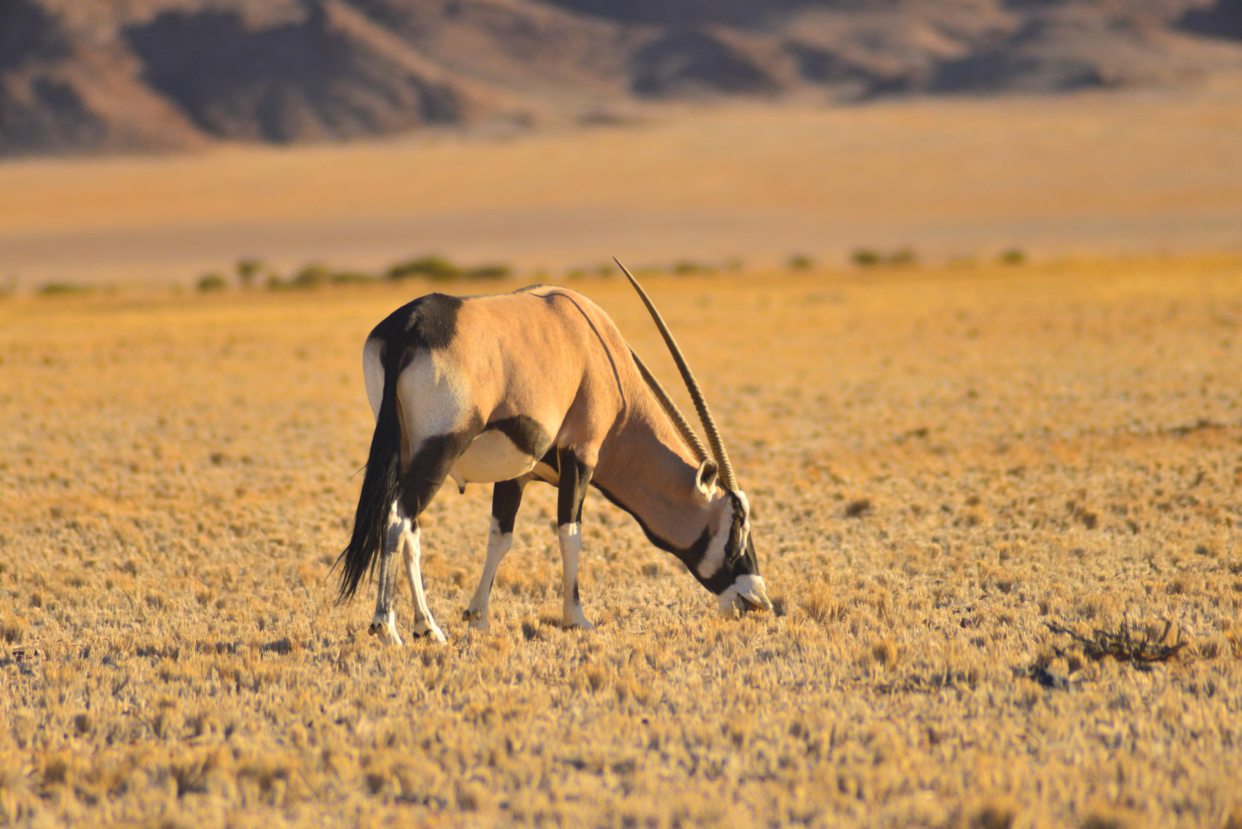 Namibia 7.JPG