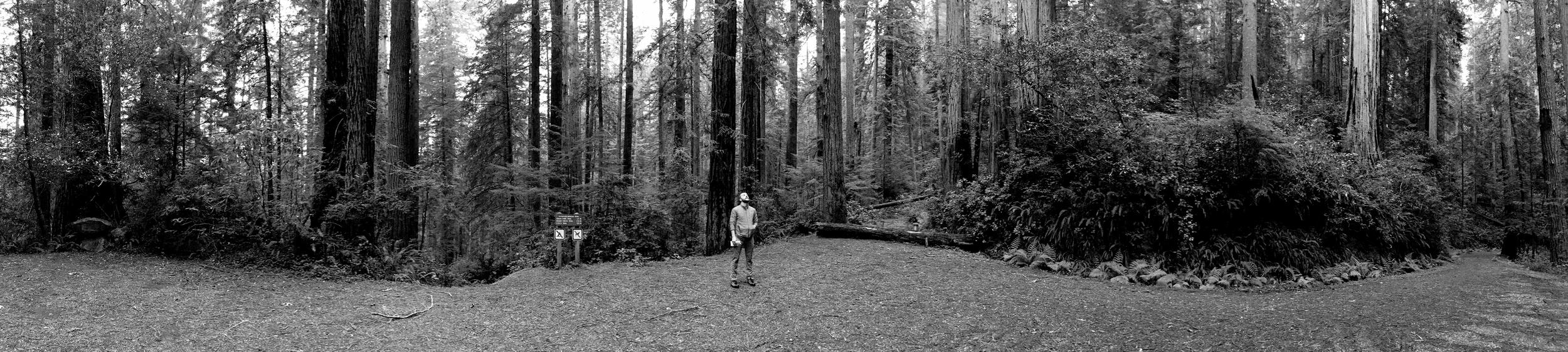 Redwoods-1-b.jpg