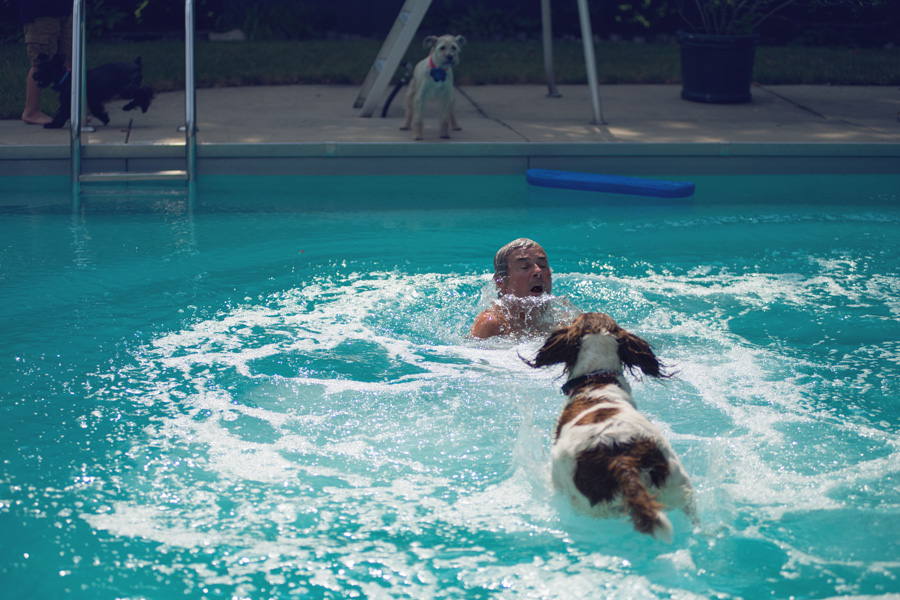 dog-swimming-pool