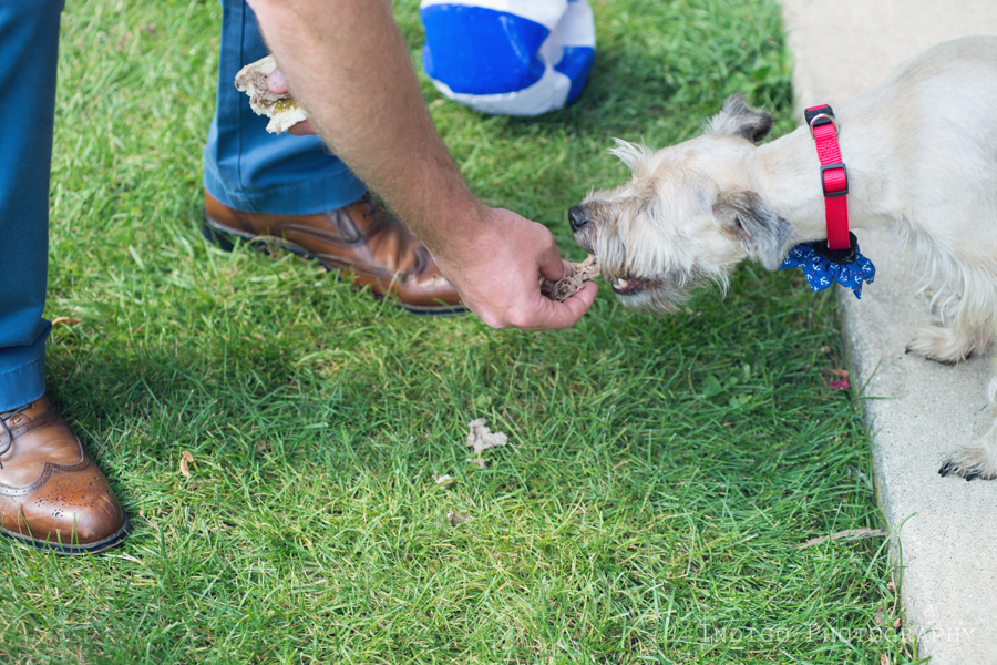 dog-eating