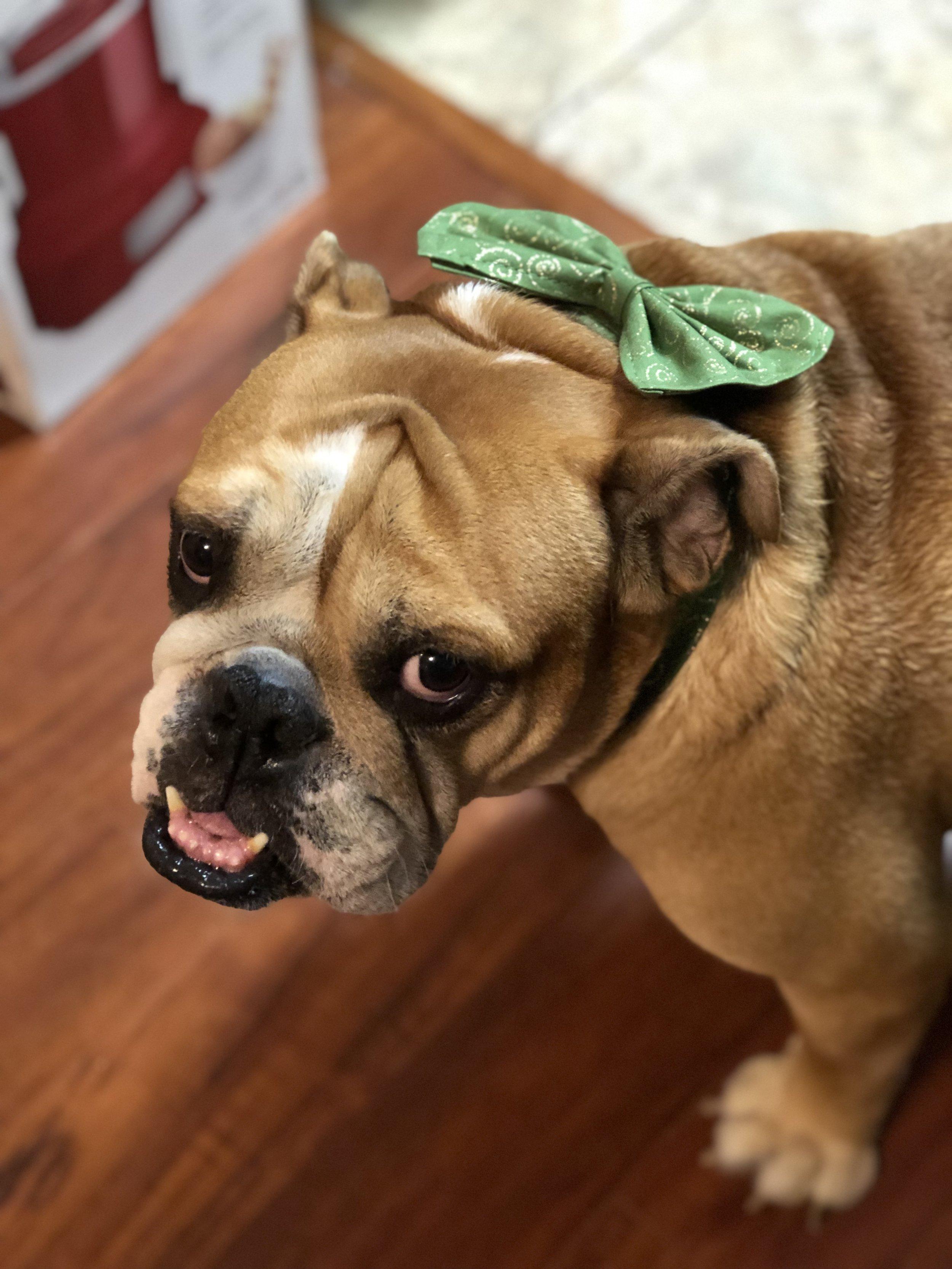 St. Patrick's Bow Tie