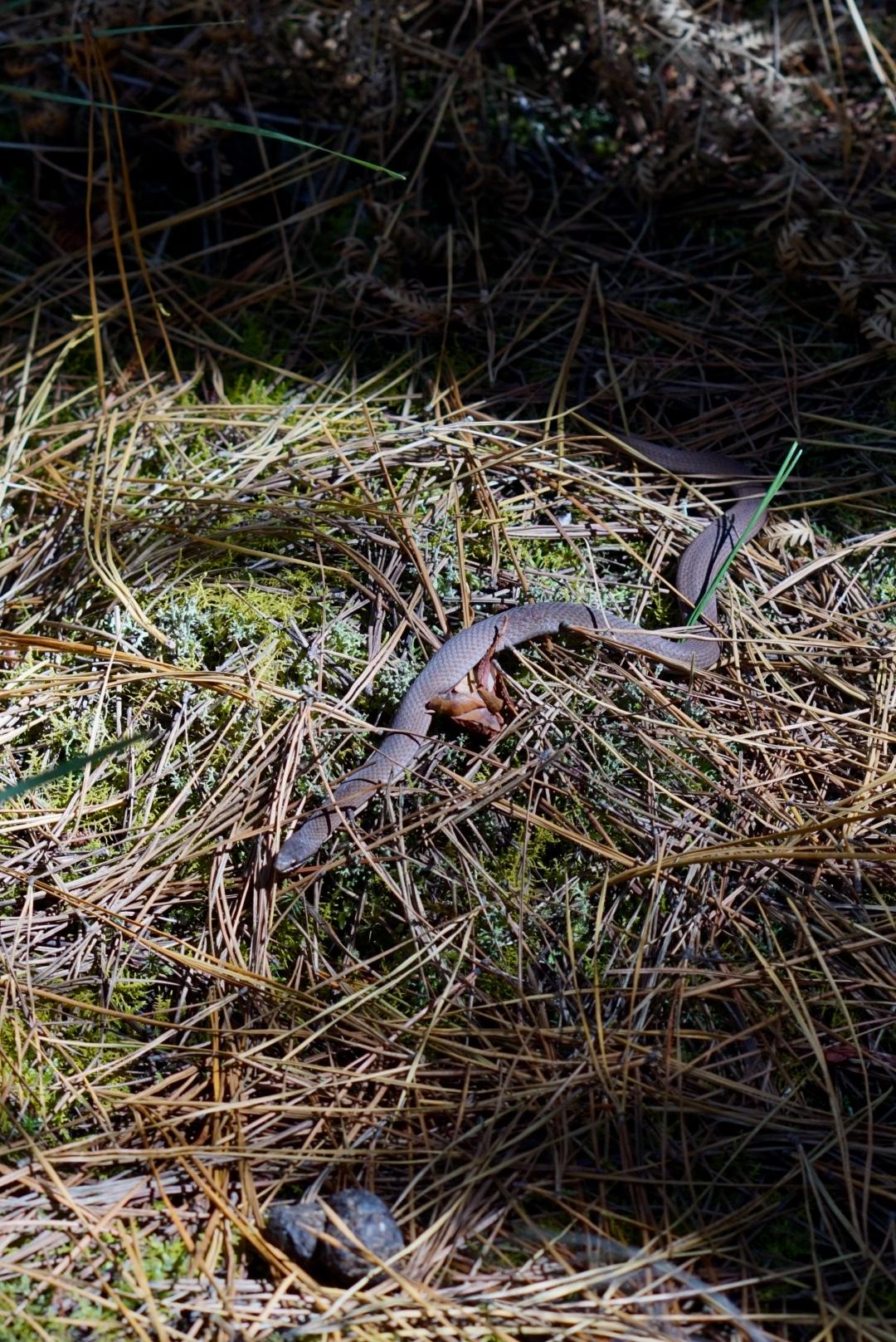 NatashaMorgan_forest_snake.jpg