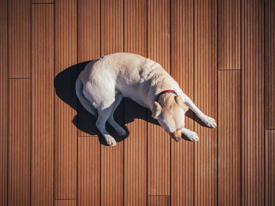dogsitting.jpg