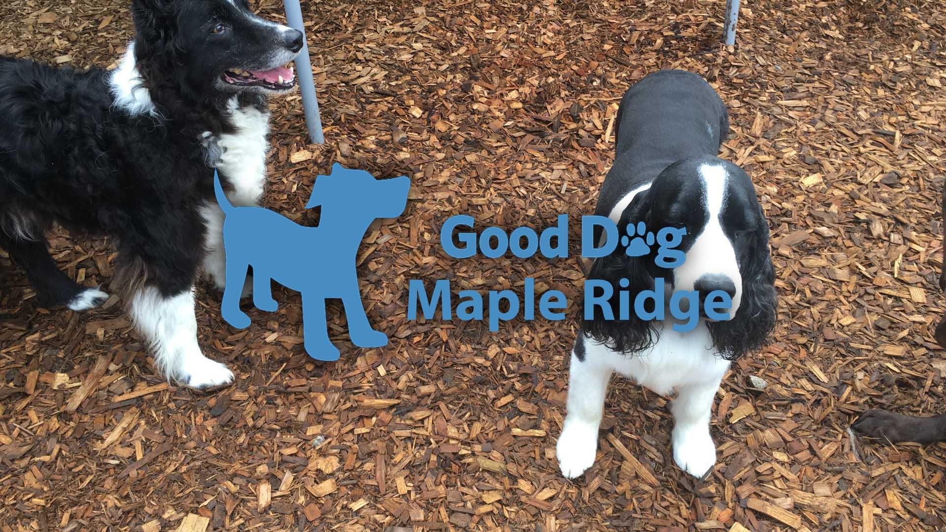 maple-ridge-dog-boarding.jpg