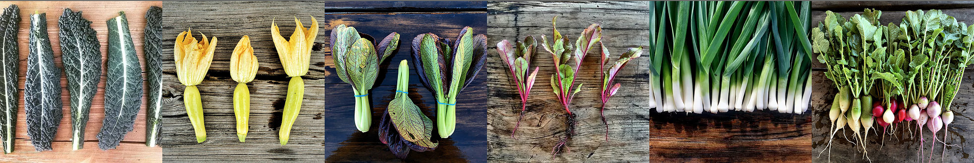 vegetable panorama