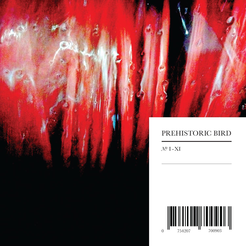 Prehistoric_Bird_front.jpg