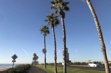 Santa Monica Palm and beach