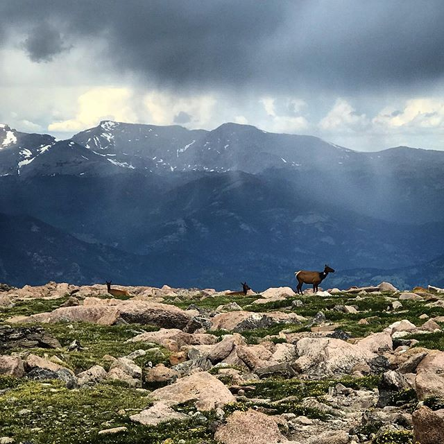 #elk #nature #mountains #rain #hikes
