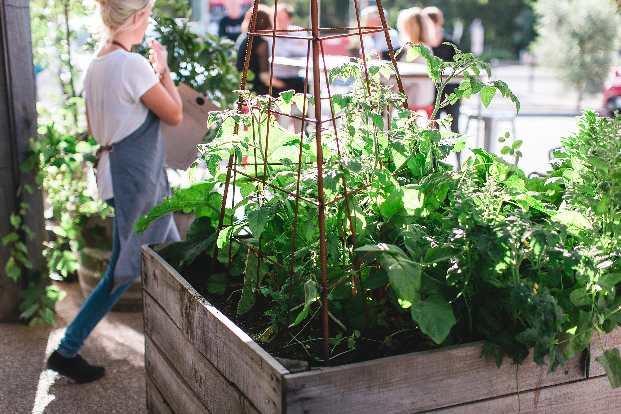 The-Epicurean_The-Store_Planter-Boxes.jpeg
