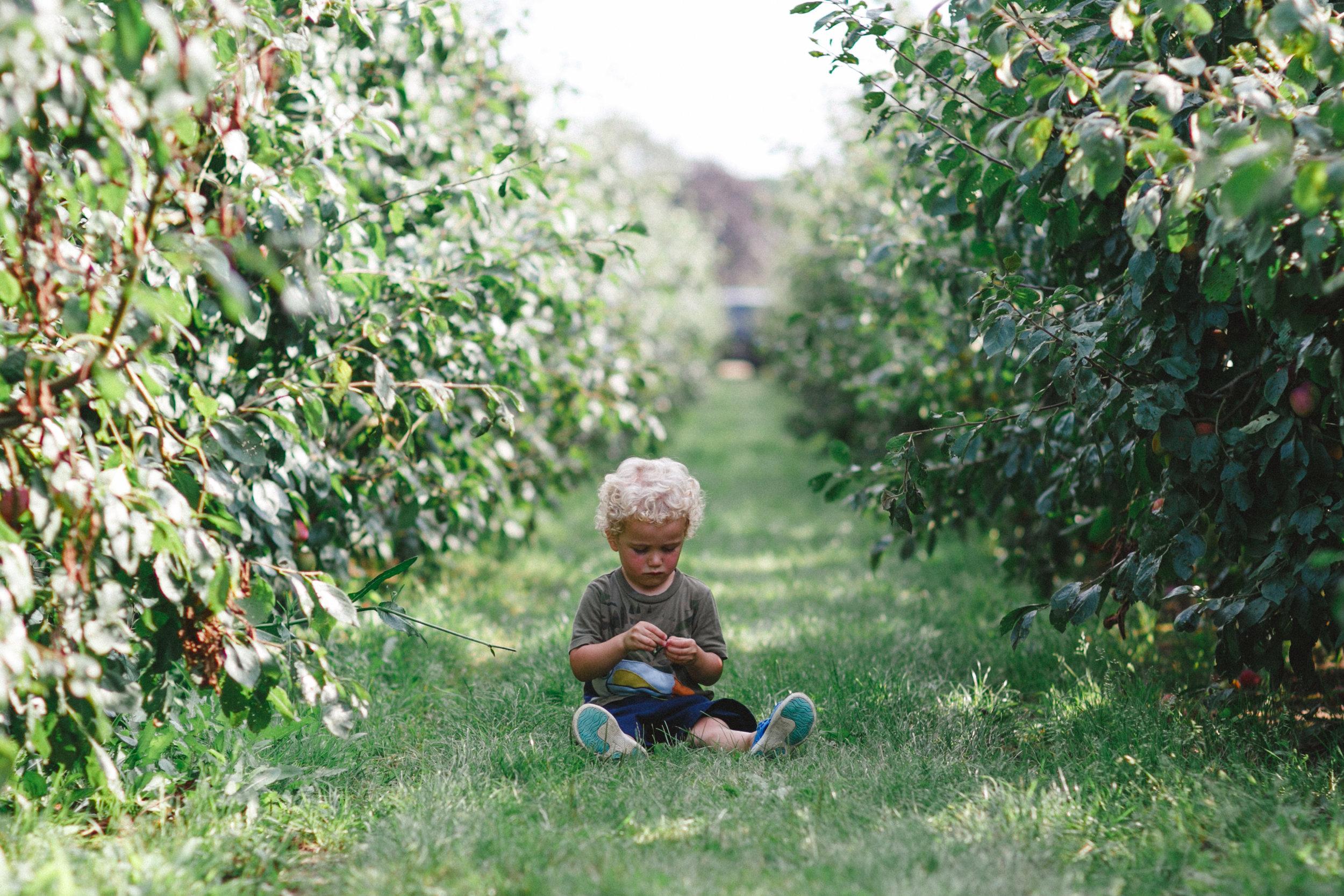 The Plum Orchard at Garsons Farm