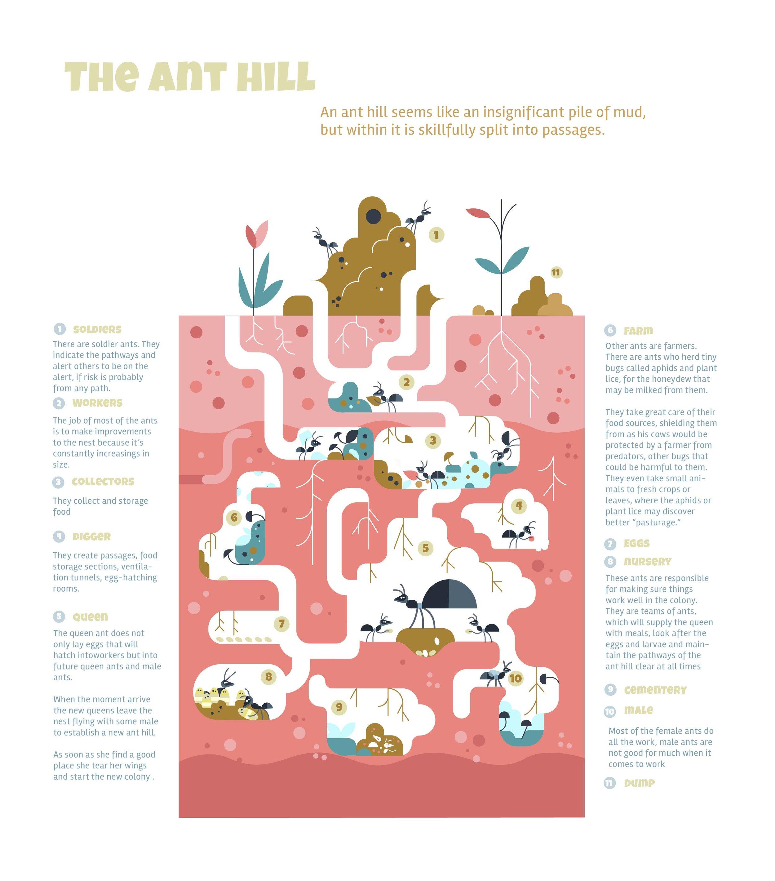 hormuguero, ant hill, info, poster, ants.jpg