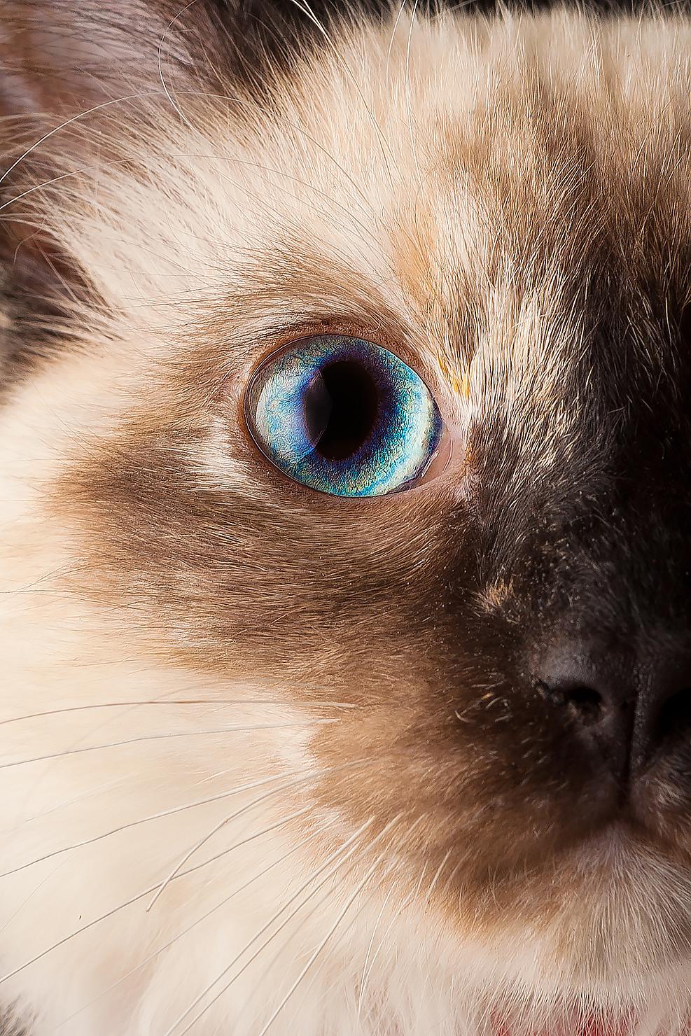 cat_005.jpg