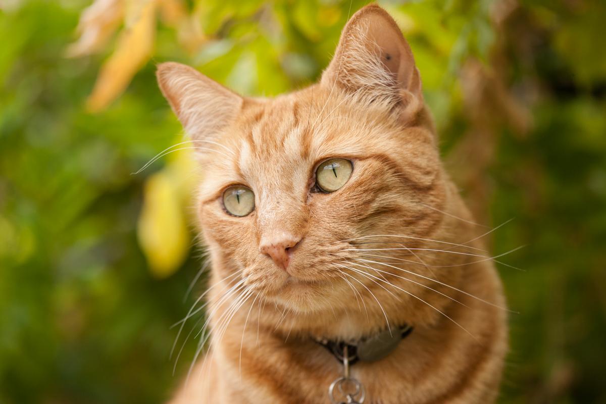 catFB_002.jpg
