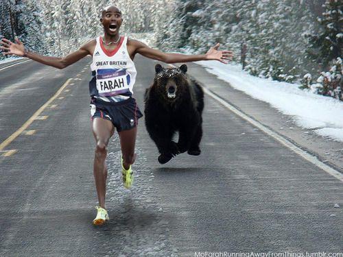 Mo bear.jpg