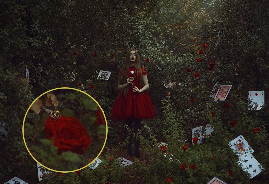 the red queen.jpg