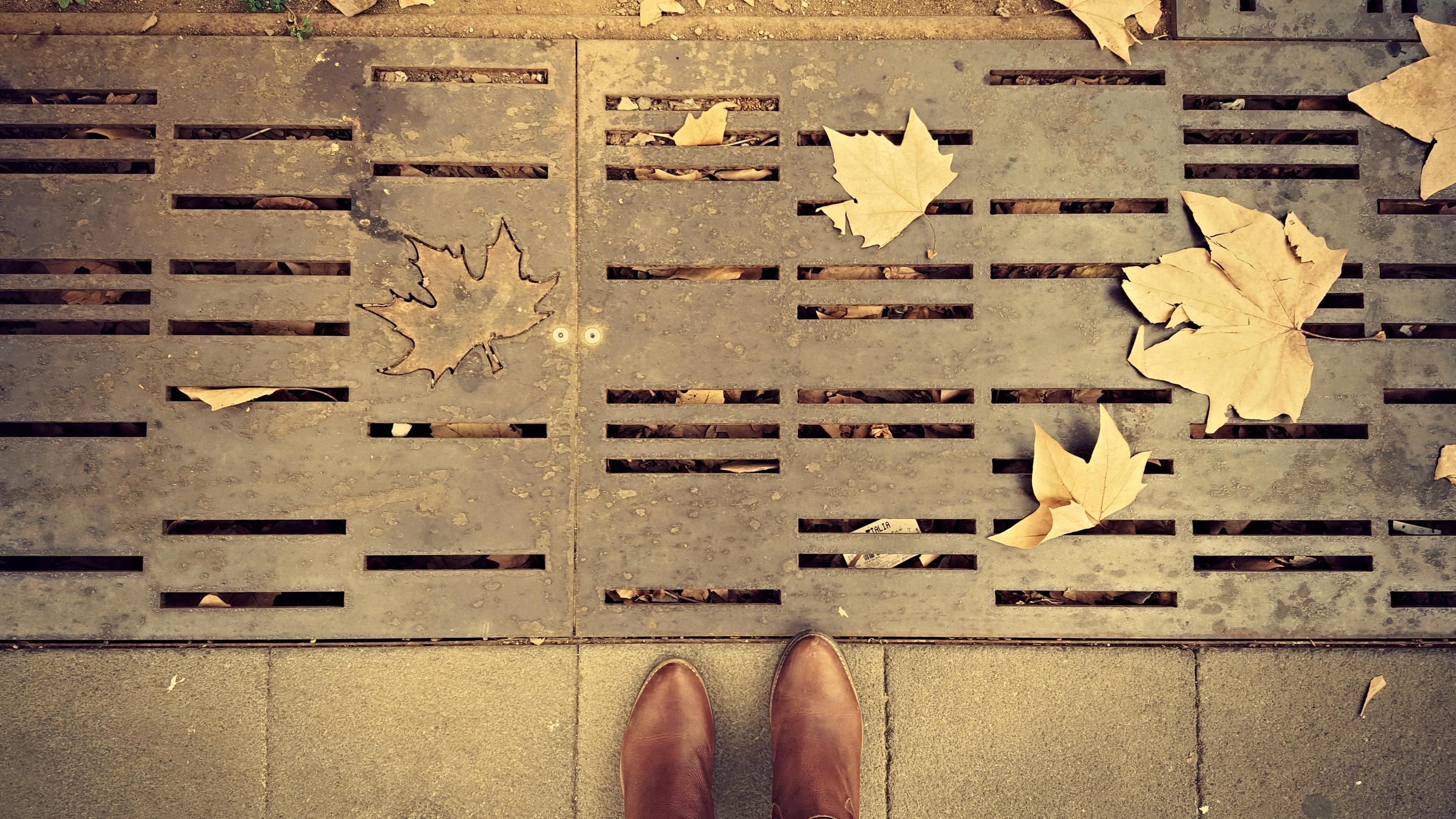 Shoes leaves edit.jpg