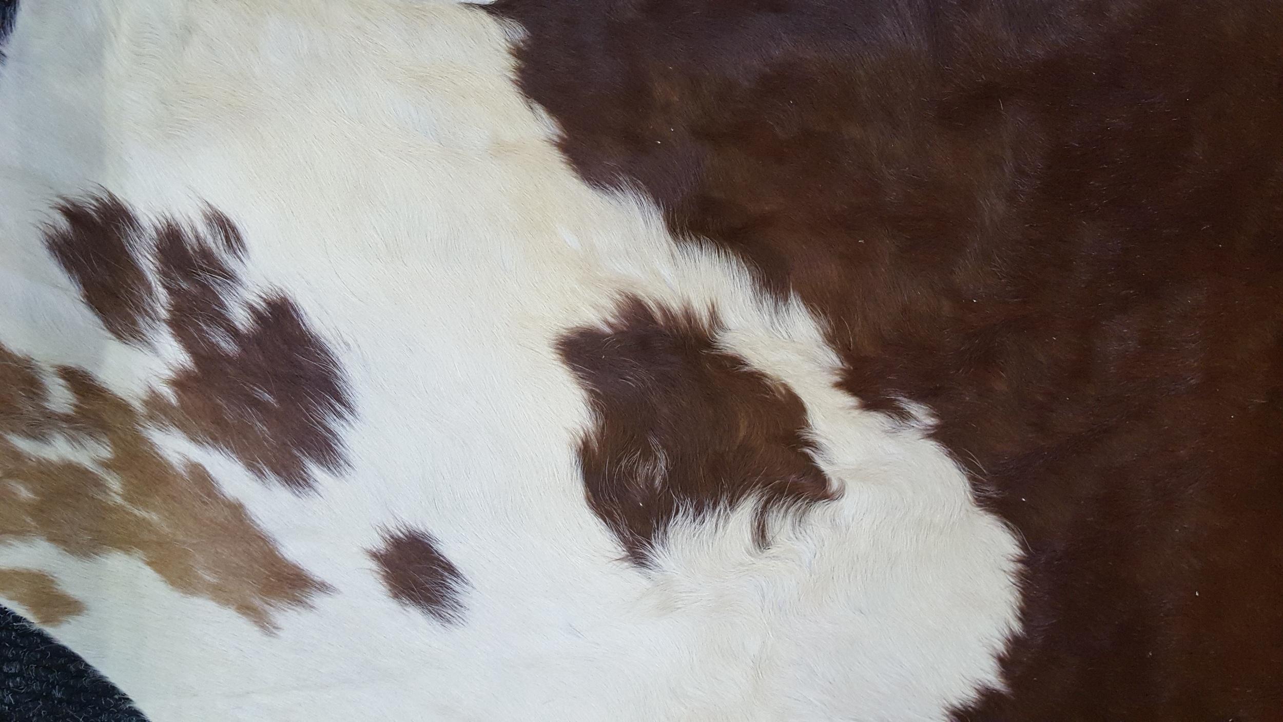 Soft, textured Nguni Skin