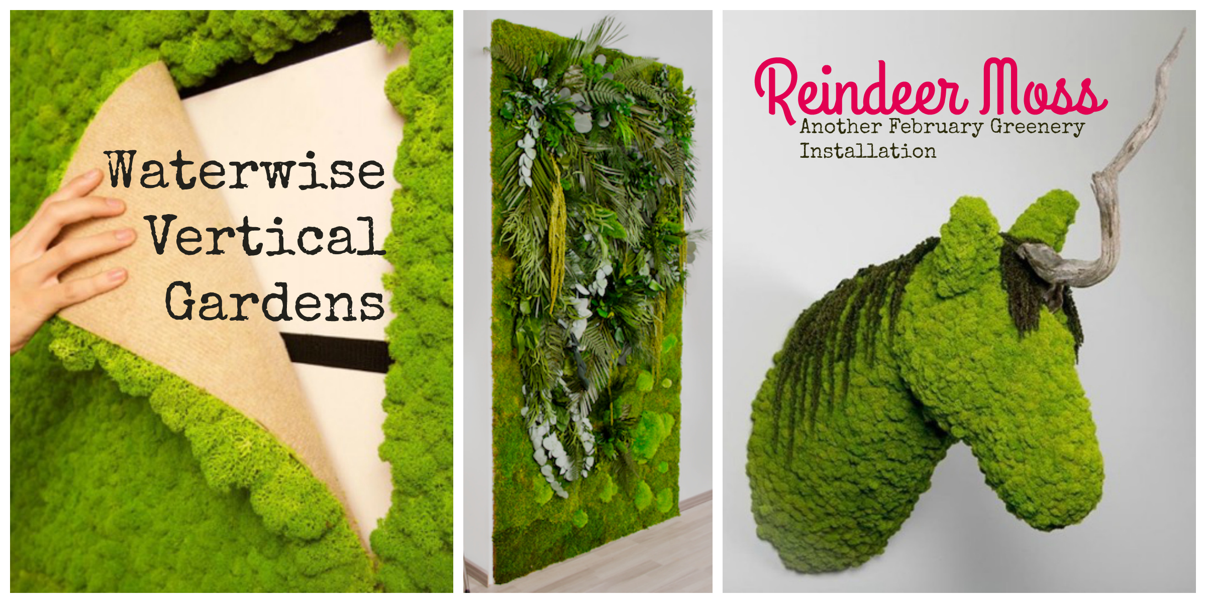 Waterwise vertical and wall garden solutions Reindeer Moss for Greenery Tassels & Tigers Interiors