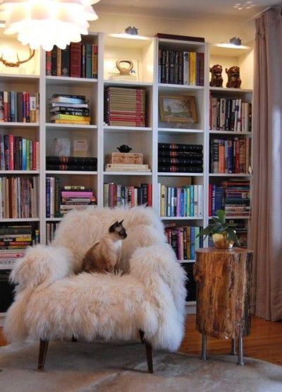 fluffy cat on warm fluffy chair
